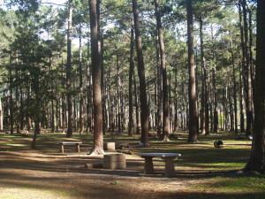 Tokai Forest, Plumbing Service Tokai